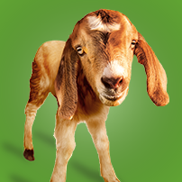 Oxfam Unwrapped - Gift of a Goat