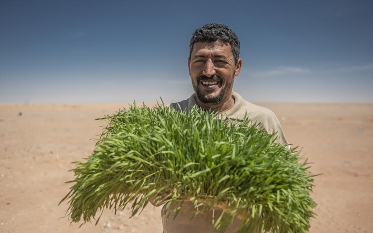 Growing_In_The_Desert