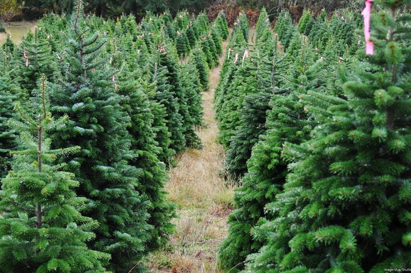 Ecofriendly trees