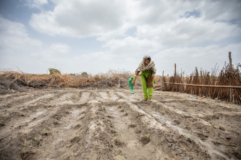 Woman waters her dry crops