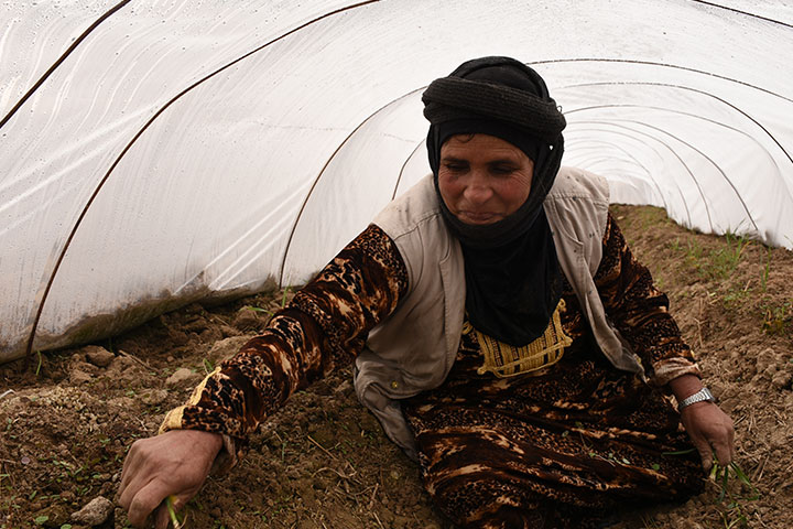 Syrian woman regrows her garden and livelihood