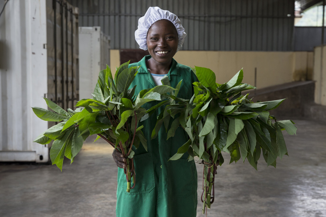 Shekina - Rwanda Cassava