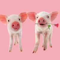 Oxfam Unwrapped - The Gift of a Pair of Pigs