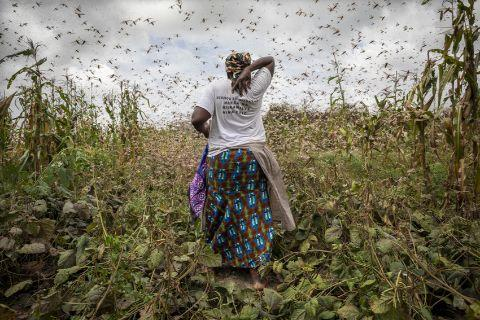 woman in locust swarm africa