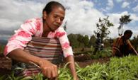 Donate to help farmers to grow more food to feed their families