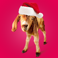 Oxfam Unwrapped - Gift of a Goat for Christmas